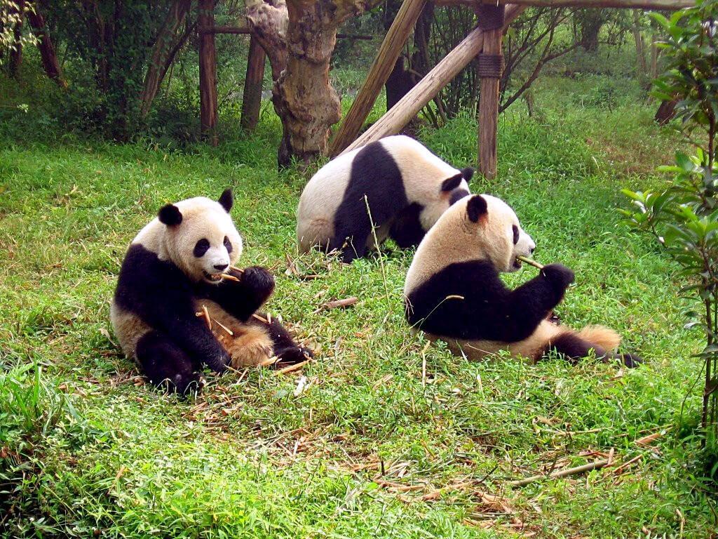 santuario-panda-China